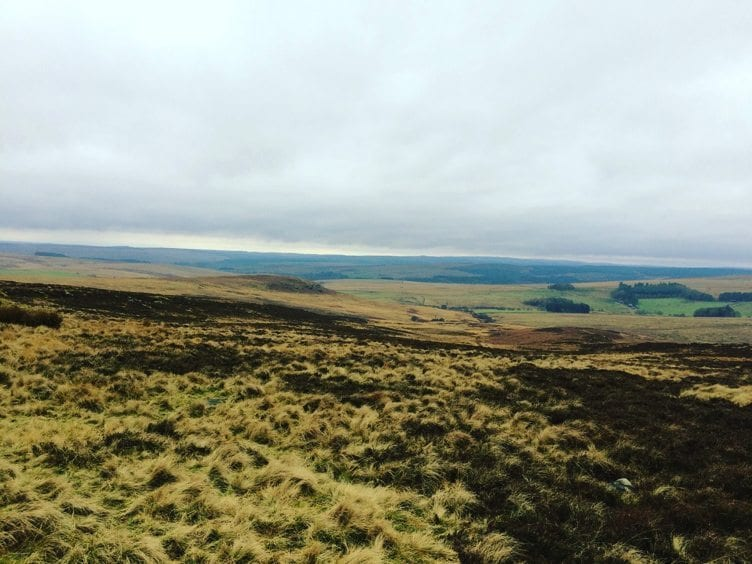 Looking out over the Northumbrian countryside