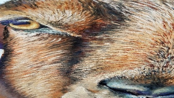 Close up of the goats face.