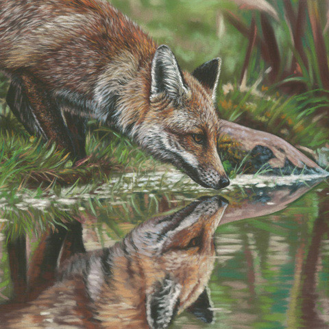 An Emma Colbert art piece, of a fox sipping water from a pond.