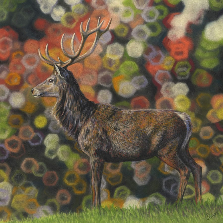 Pastel painting by Emma Colbert.