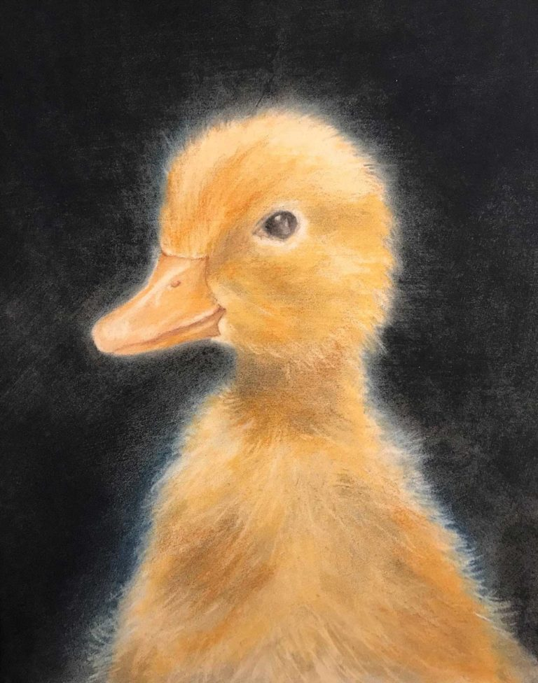 Pastel painting of a duckling, by Daniel Porter.
