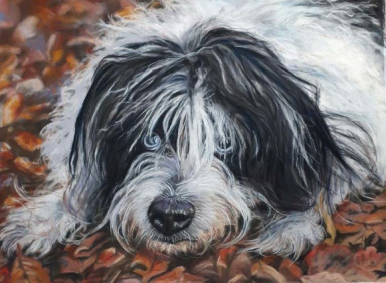 A pastel painting of a black and white shaggy dog, called Scruff.
