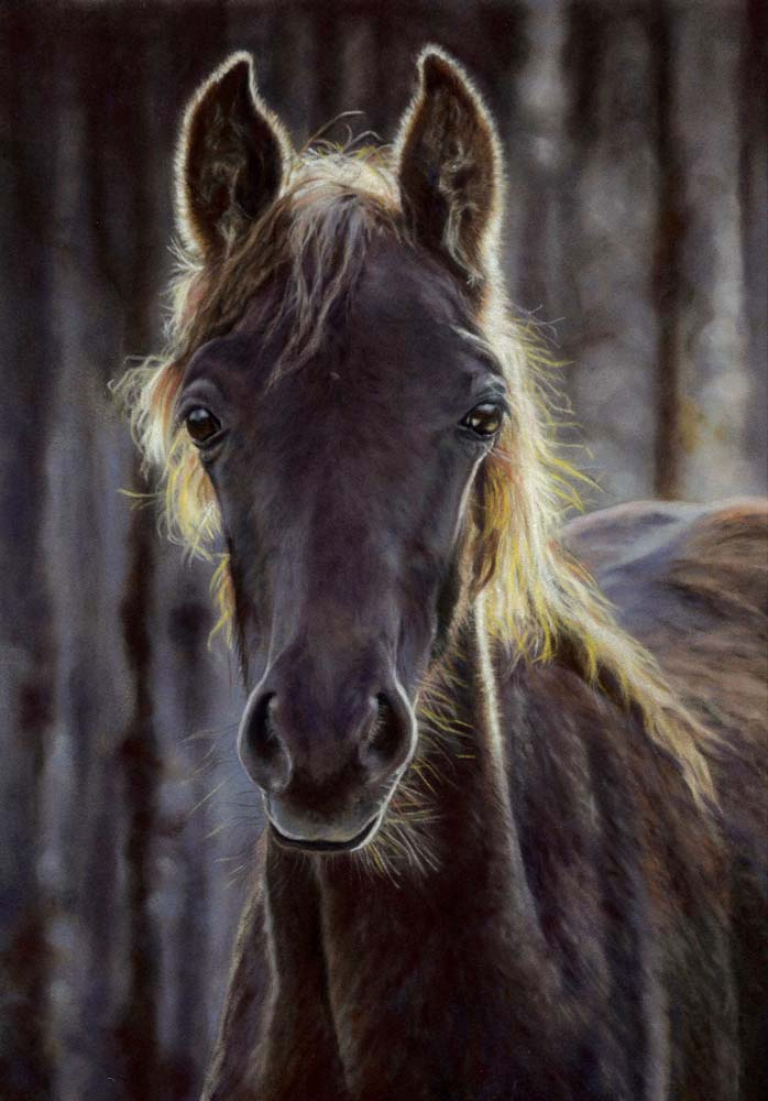 A pastel painting of a dark haired horse, backlit by the low sun.