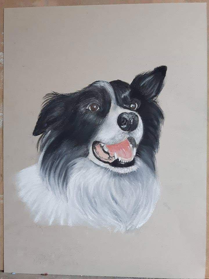 Pastel portrait of a Collie