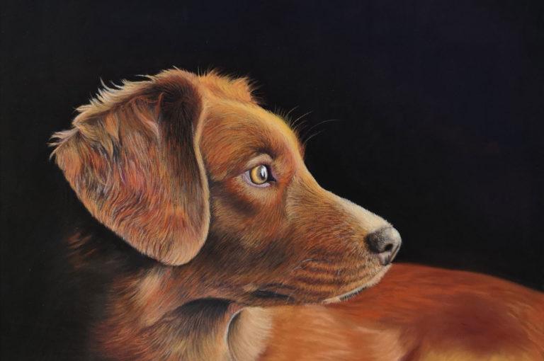 Pastel portrait of a dog