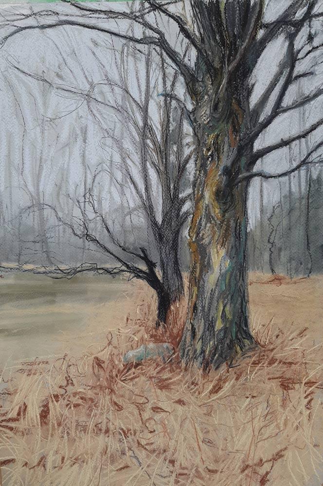 Maple, by Rhonda Abrams