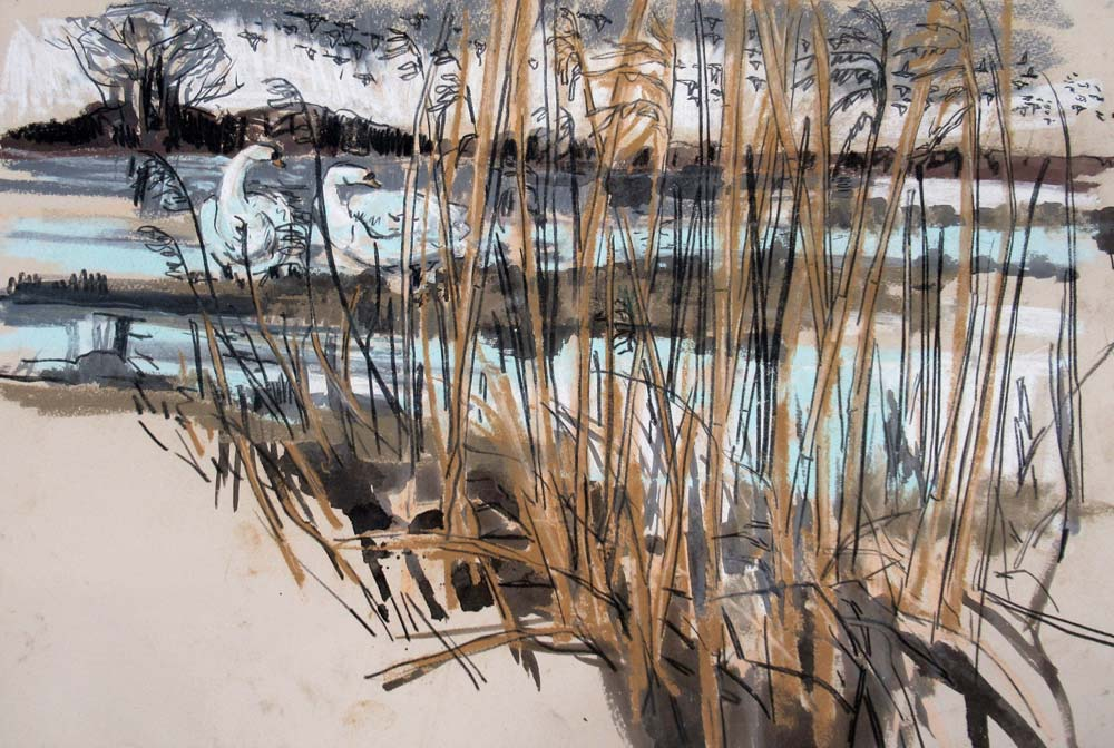 Pastel sketch of mute swans amidst a reedbed