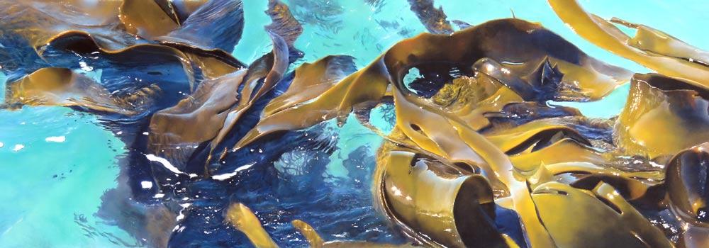 Southern Kelp V, by Julie Freeman