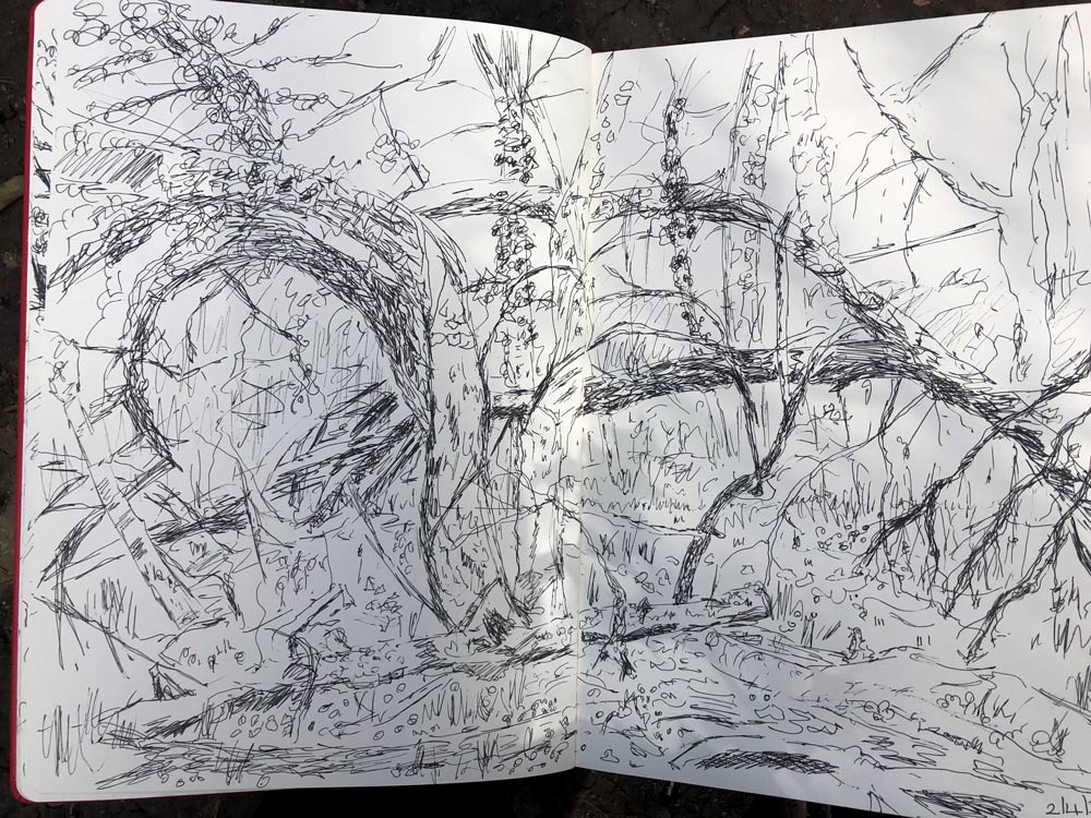 Dawn's sketches in pen.