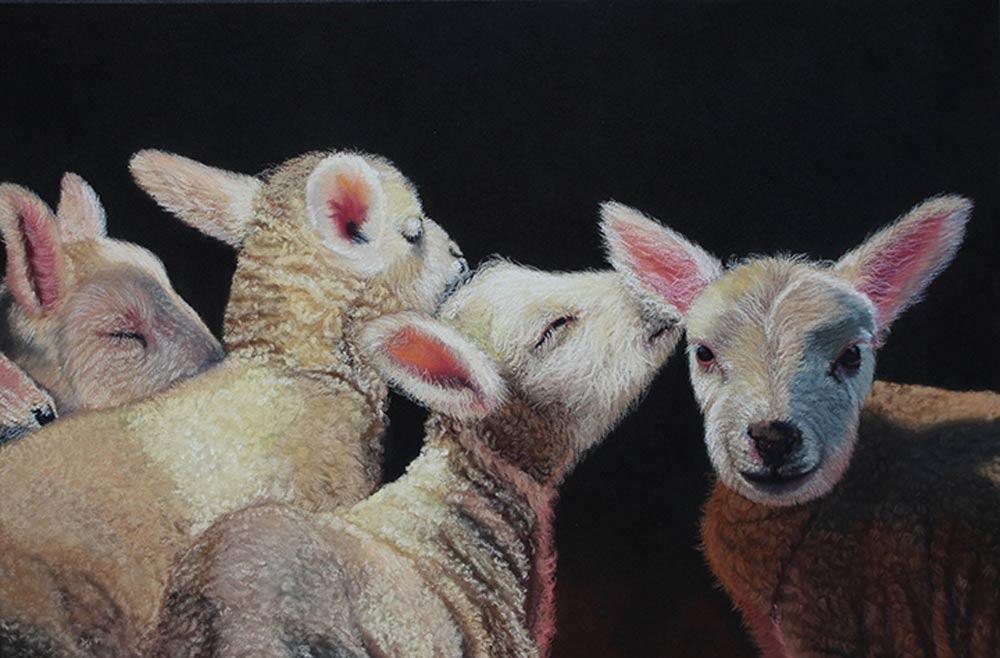 Lambs in their pen, in pastel.