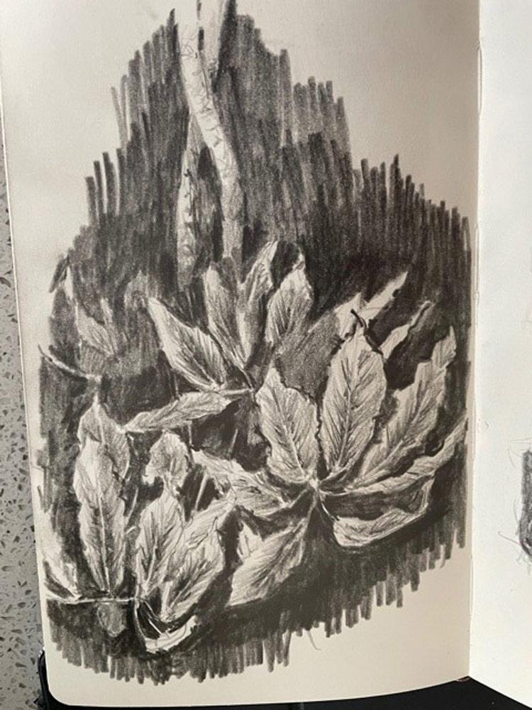 Stuart's pencil sketches of plants.
