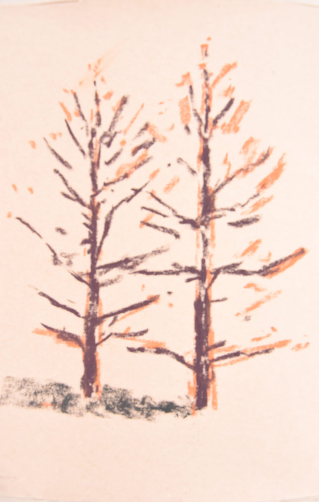 Adding colour to the conifer trees.