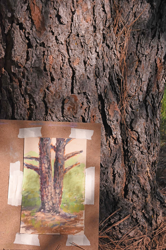 Painting taped to board, resting against the trunk of a conifer.